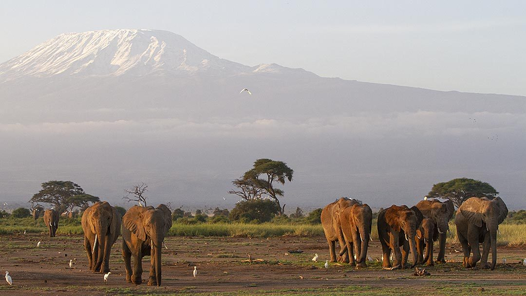 Kilimanjaro Dağı, Amboseli Milli Parkı