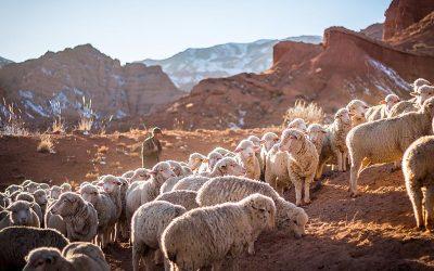 İsa Mesih İyi Çobandır