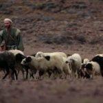 İsa İyi Çobandır