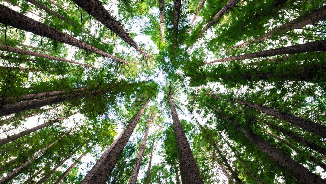 Ağaçların Üst Dallarını Bırakın