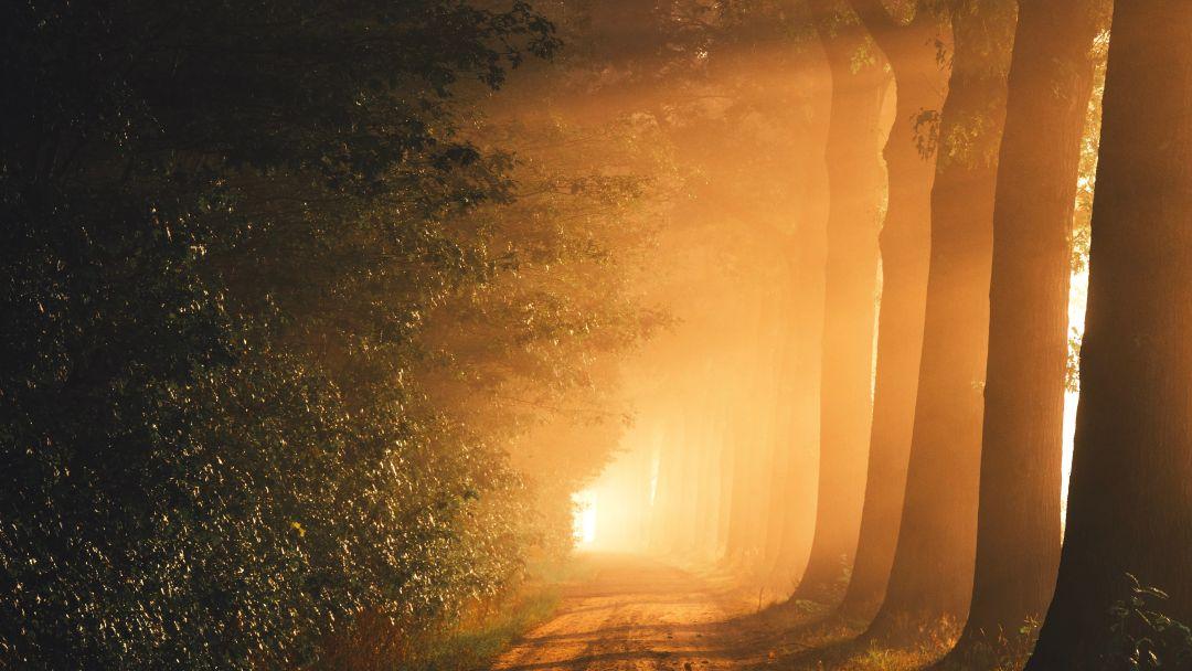 Işık Çocukları Olarak Yaşayın